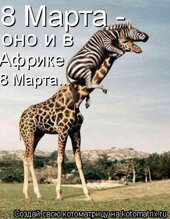 Котоматрица: 8 Марта - оно 8 Марта - оно и в Африке 8 Марта...
