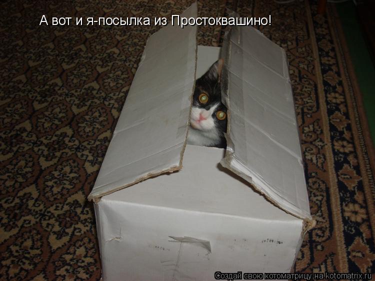 Котоматрица: А вот и я-посылка из Простоквашино!