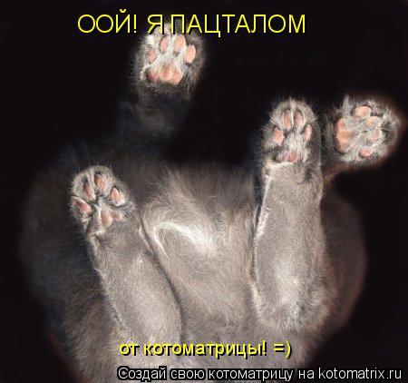 Котоматрица: ООЙ! Я ПАЦТАЛОМ от котоматрицы! =)