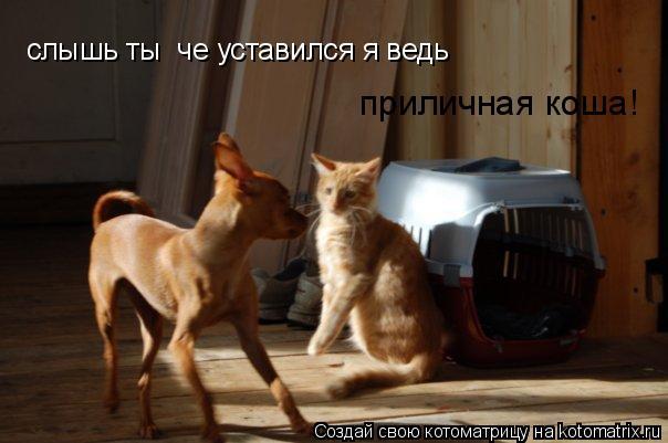 Котоматрица: слышь ты  че уставился я ведь  приличная коша!