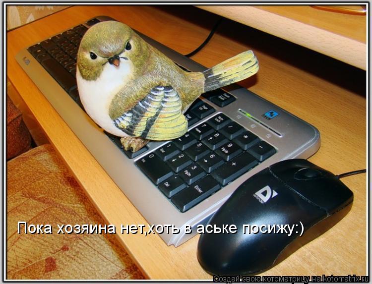Котоматрица: Пока хозяина нет,хоть в аське посижу:)