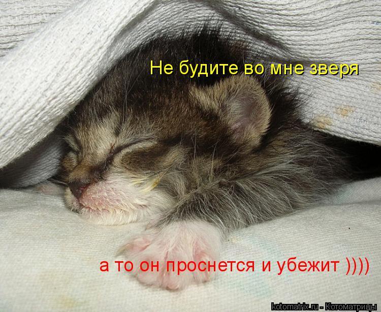 Котоматрица: Не будите во мне зверя а то он проснется и убежит ))))