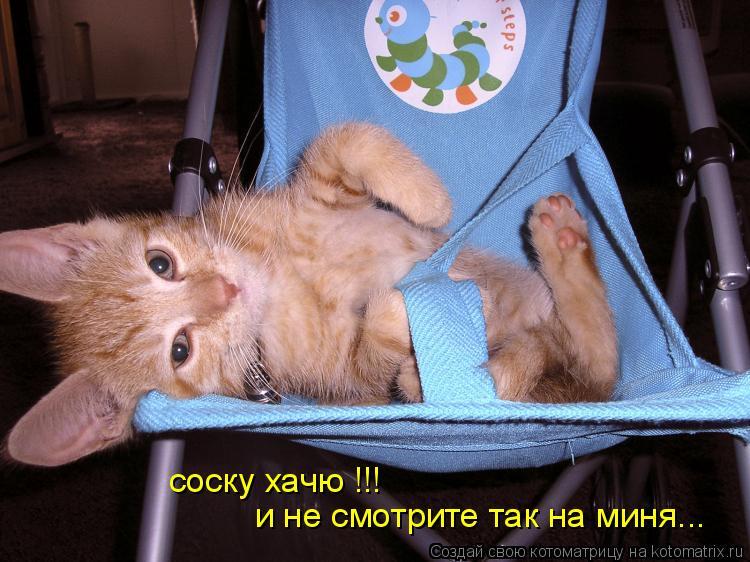 Котоматрица: соску хачю !!! и не смотрите так на миня...