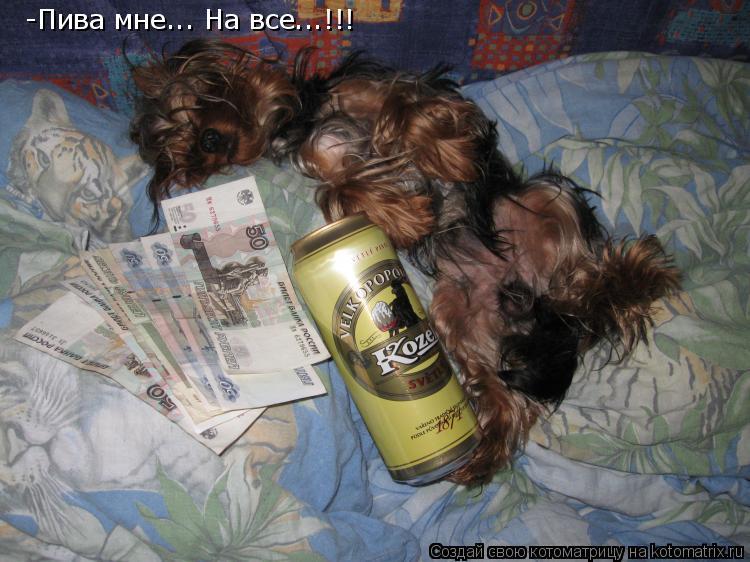 Котоматрица: -Пива мне... На все...!!!