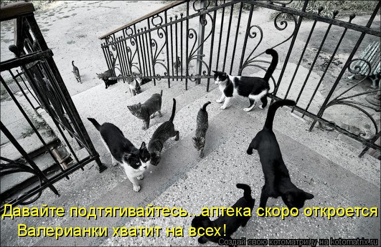 Котоматрица: Давайте подтягивайтесь...аптека скоро откроется Валерианки хватит на всех!