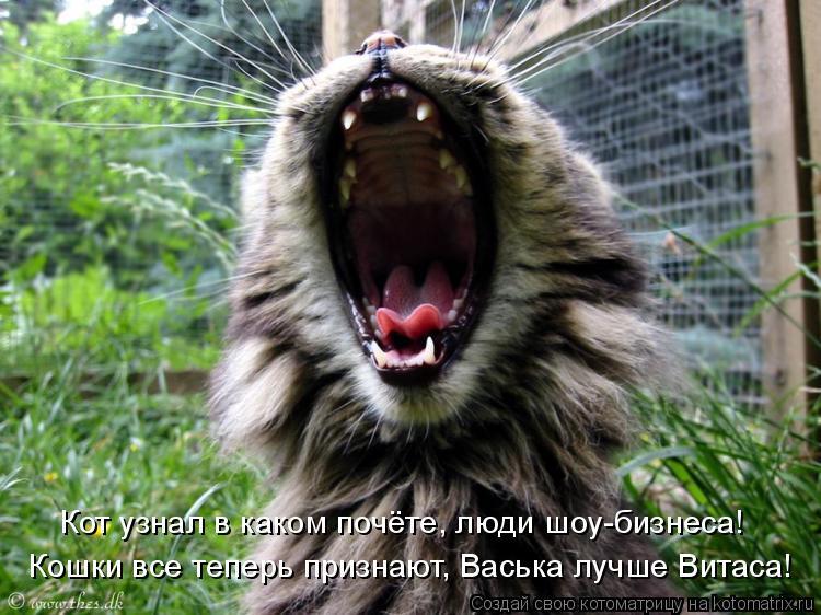 Котоматрица: Кошки все теперь признают, Васька лучше Витаса! Кот узнал в каком почёте, люди шоу-бизнеса!