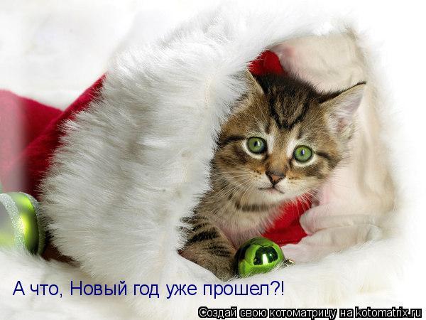 Котоматрица: А что, Новый год уже прошел?!