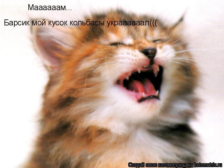 Котоматрица: Маааааам... Барсик мой кусок кольбасы украааааал(((