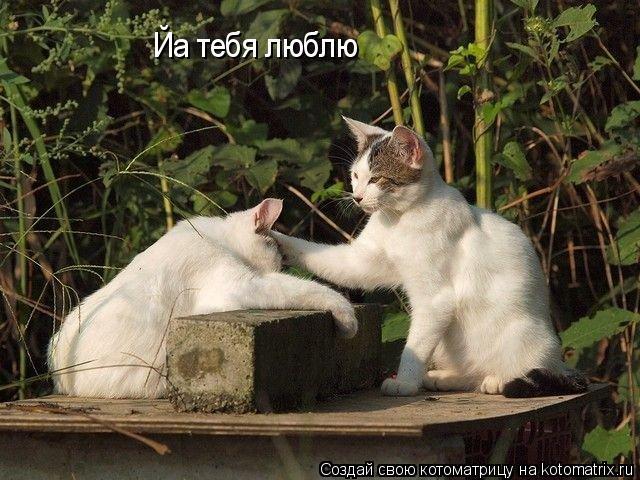 Котоматрица: Йа тебя люблю