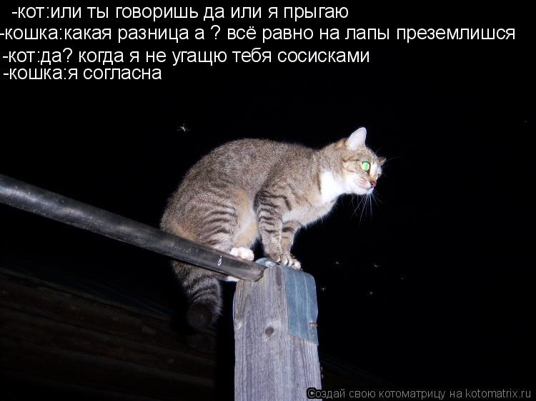 Котоматрица: -кот:или ты говоришь да или я прыгаю -кошка:какая разница а ? всё равно на лапы преземлишся -кот:да? когда я не угащю тебя сосисками -кошка:я со