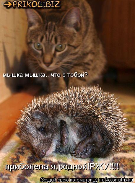 Котоматрица: мышка-мышка...что с тобой? приболела я,родной!РЖУ!!!!