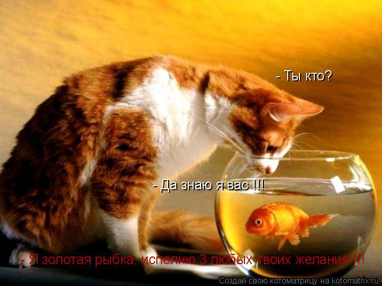 Котоматрица: - Ты кто? - Я золотая рыбка, исполню 3 любых твоих желания !!! - Да знаю я вас !!!