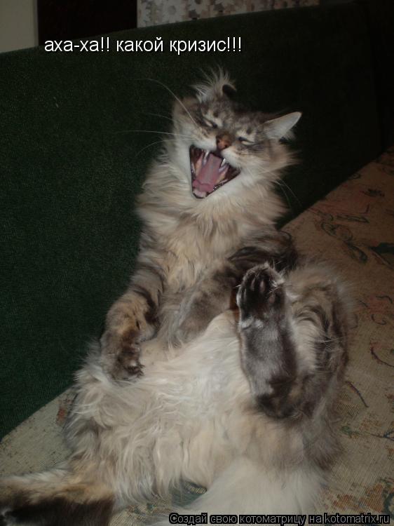 Котоматрица: аха-ха!! какой кризис!!!