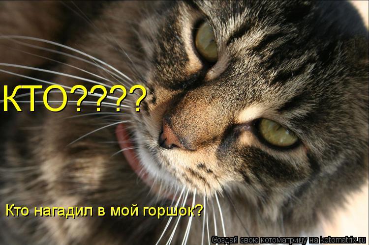 Котоматрица: КТО???? Кто нагадил в мой горшок?