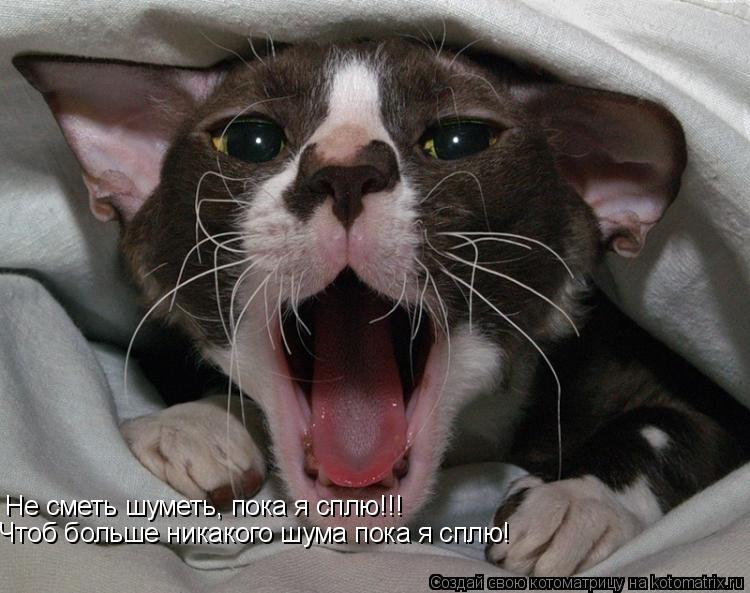 Котоматрица: Не сметь шуметь, пока я сплю!!! Чтоб больше никакого шума пока я сплю!