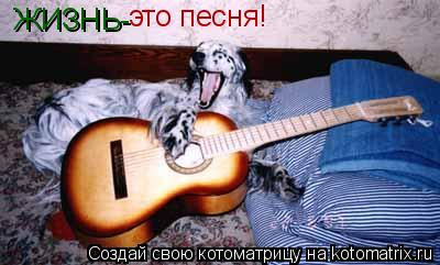 Котоматрица: ЖИЗНЬ- это песня!
