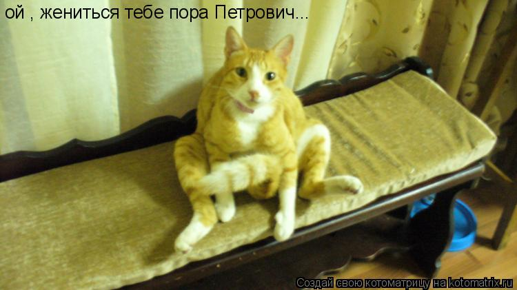 Котоматрица: ой , жениться тебе пора Петрович...