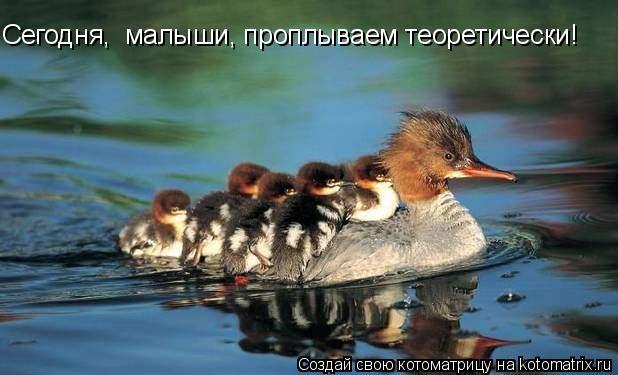 Котоматрица: Сегодня,  малыши, проплываем теоретически!