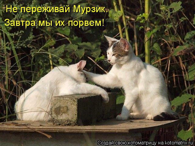 Котоматрица: Не переживай Мурзик. Завтра мы их порвем!