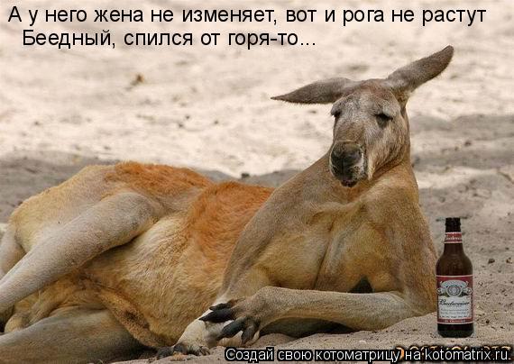 Котоматрица: А у него жена не изменяет, вот и рога не растут Беедный, спился от горя-то...