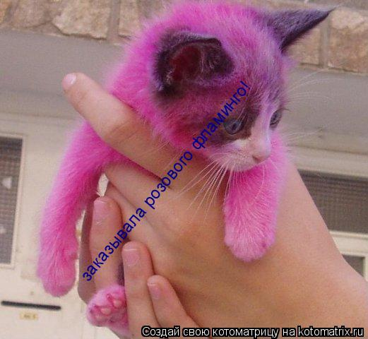 Котоматрица: заказывала розового фламинго! заказывала розового фламинго!