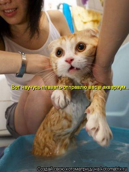 Котоматрица: Вот научусь плавать-отправлю вас в аквариум..