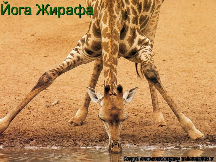 Котоматрица: Йога Жирафа