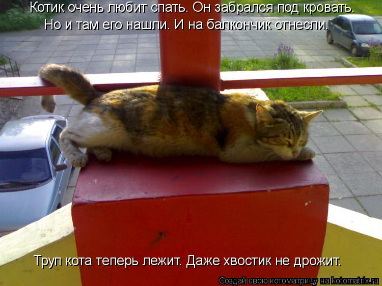Котоматрица: Котик очень любит спать. Он забрался под кровать. Но и там его нашли. И на балкончик отнесли. Труп кота теперь лежит. Даже хвостик не дрожит.