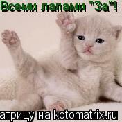 """Котоматрица: Всеми лапами """"За""""!"""