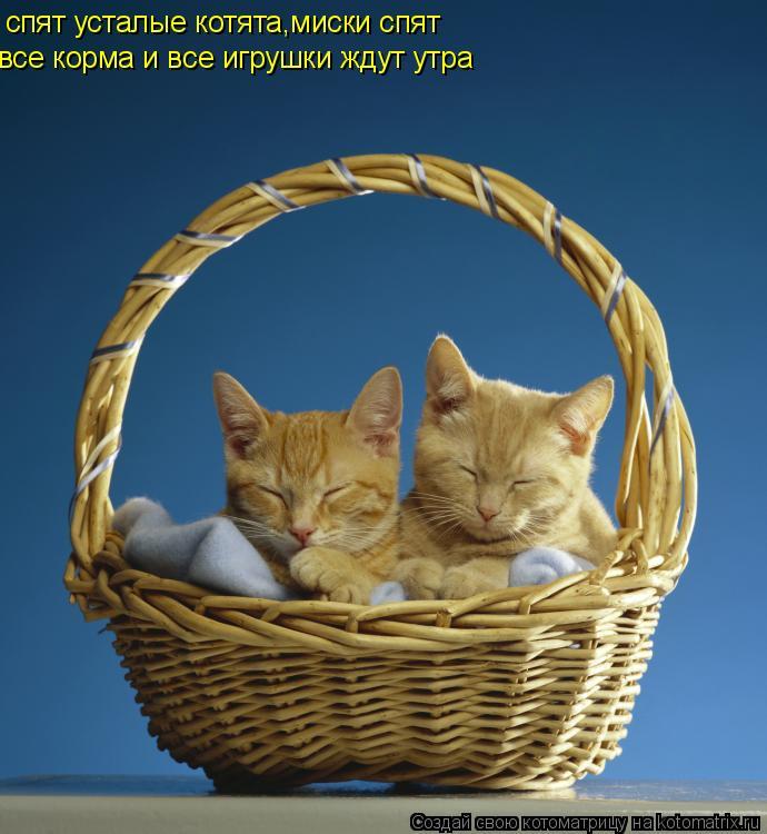 Котоматрица: спят усталые котята,миски спят все корма и все игрушки ждут утра