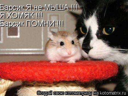 Котоматрица: Барсик Я не МЫША !!!  Я ХОМЯК !!! Барсик ПОМНИ !!!