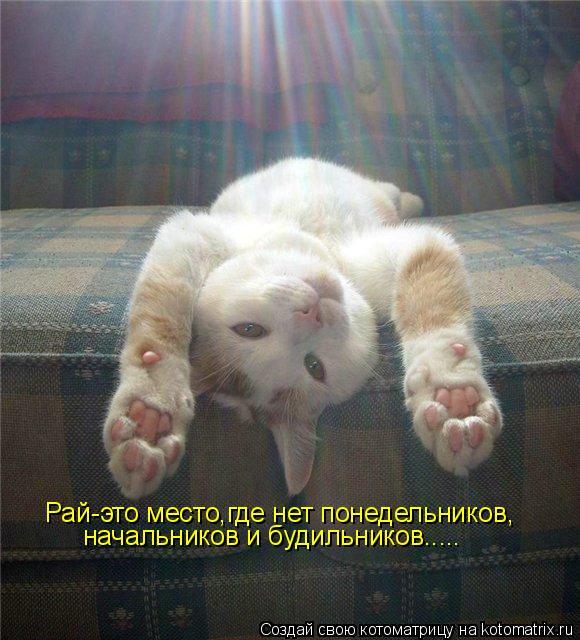 Котоматрица: Рай-это место,где нет понедельников, начальников и будильников.....