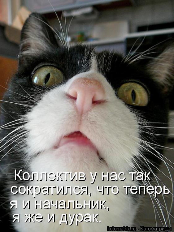 Котоматрица: Коллектив у нас так  сократился, что теперь я  я и начальник,  я же и дурак.