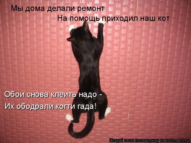 Котоматрица: Мы дома делали ремонт На помощь приходил наш кот Обои снова клеить надо -  Их ободрали когти гада!