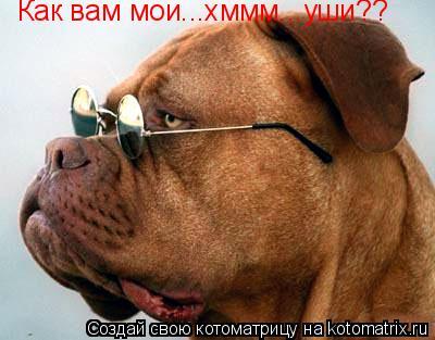 Котоматрица: Как вам мои...хммм...уши??