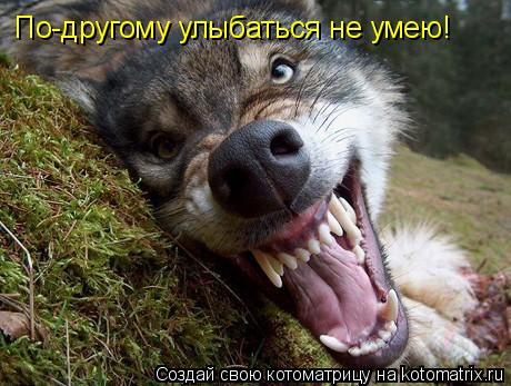 Котоматрица: По-другому улыбаться не умею!
