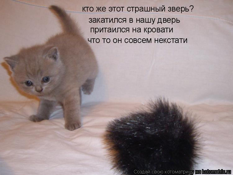 Котоматрица: кто же этот страшный зверь? закатился в нашу дверь притаился на кровати что то он совсем некстати