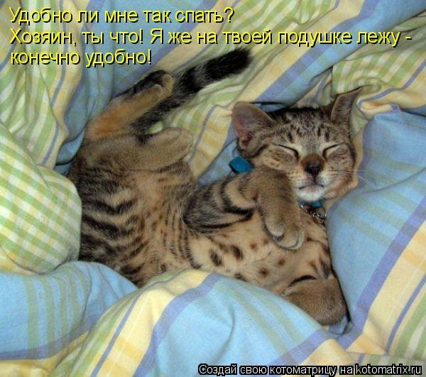 Котоматрица: Удобно ли мне так спать? Хозяин, ты что! Я же на твоей подушке лежу -  конечно удобно!