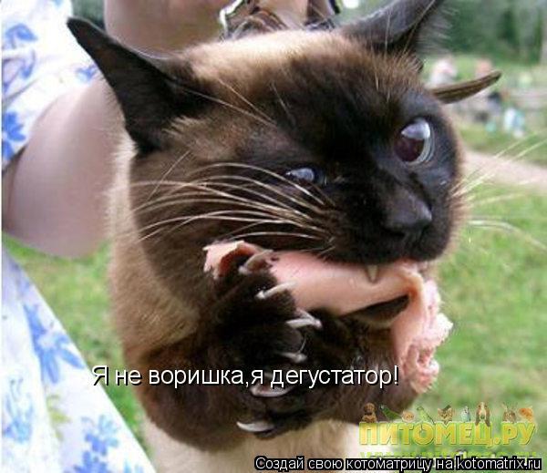 Котоматрица: Я не воришка,я дегустатор!