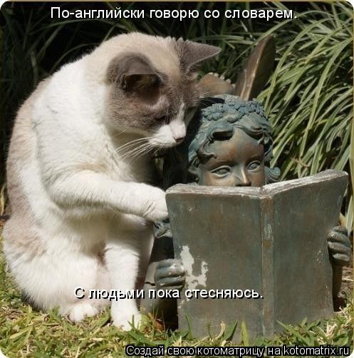 Котоматрица: По-английски говорю со словарем.  С людьми пока стесняюсь.