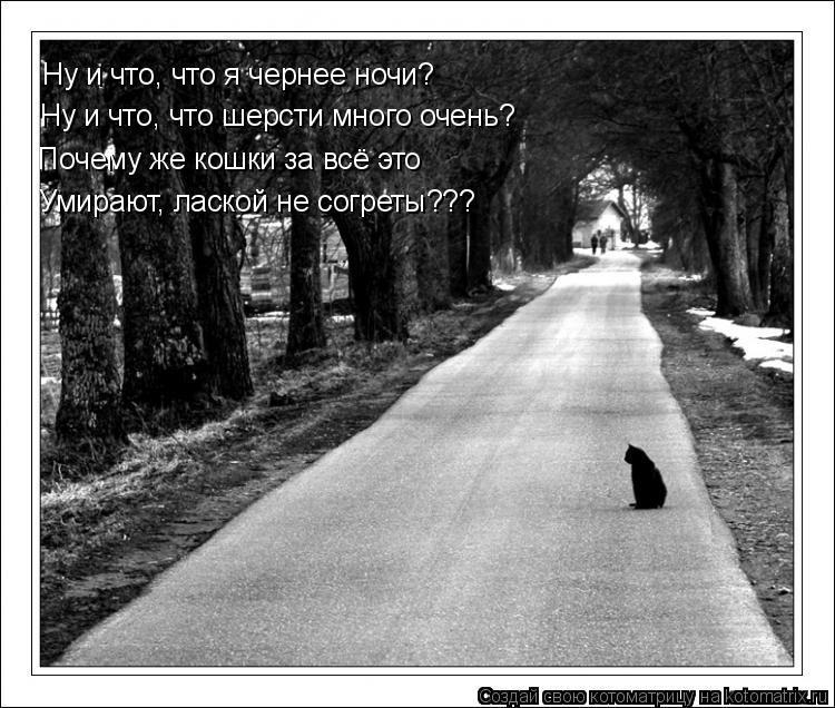 Котоматрица: Ну и что, что я чернее ночи?  Ну и что, что шерсти много очень? Почему же кошки за всё это Умирают, лаской не согреты???