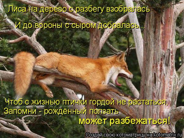 Котоматрица: Лиса на дерево с разбегу взобралась И до вороны с сыром добралась... Чтоб с жизнью птички гордой не растаться, Запомни - рождённый ползать мо