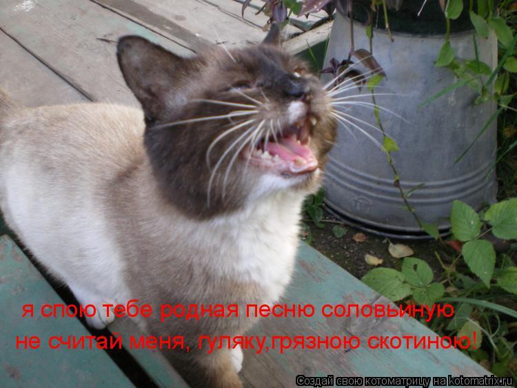 Котоматрица: я спою тебе родная песню соловьиную не считай меня, гуляку,грязною скотиною!