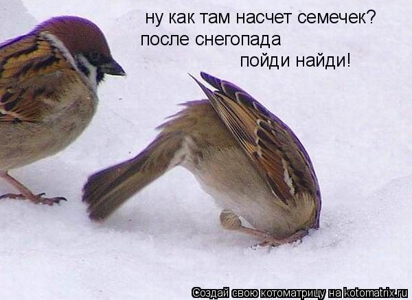 Котоматрица: ну как там насчет семечек? после снегопада пойди найди!