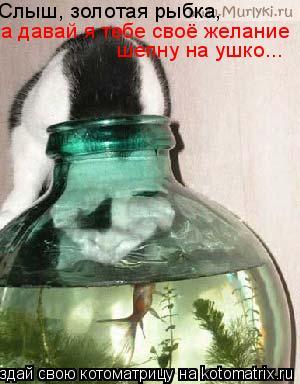 Котоматрица: Слыш, золотая рыбка, а давай я тебе своё желание шепну на ушко...
