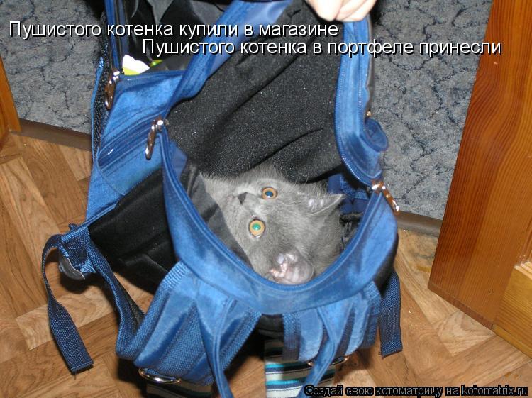 Котоматрица: Пушистого котенка купили в магазине Пушистого котенка в портфеле принесли