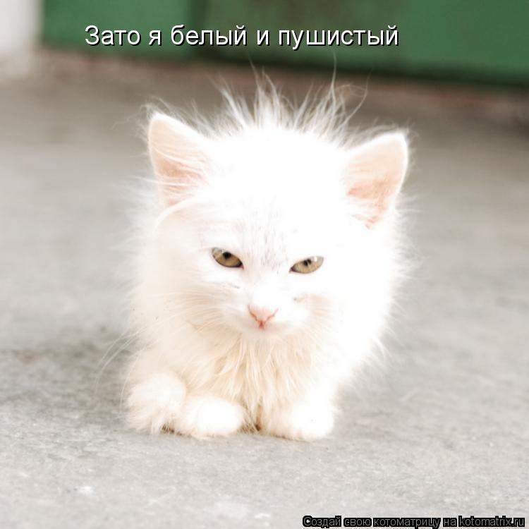 http://kotomatrix.ru/images/lolz/2009/01/27/Rk.jpg