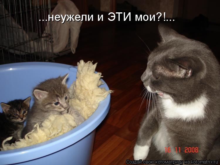 Котоматрица: ...неужели и ЭТИ мои?!...