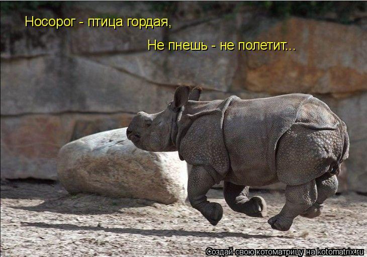 Котоматрица: Не пнешь - не полетит... Носорог - птица гордая,