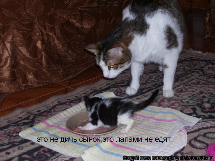 Котоматрица: это не дичь,сынок,это лапами не едят!